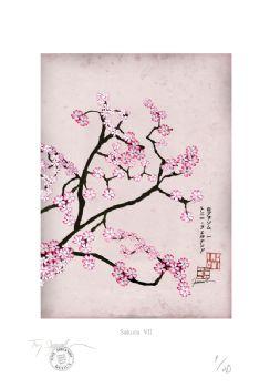 Cherry Blossom Print - Sakura 7